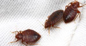 ticks on a piece of cloth