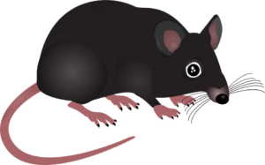 pest rodent