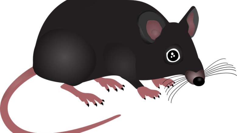 pest-rodents
